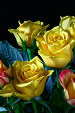 Preview iPhone wallpaper Yellow and colorful roses, black background