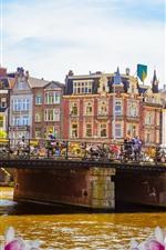 Amesterdão, ponte, rio, primavera, flores cor de rosa