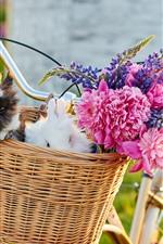 Bicicleta, cesta, coelhos, flores
