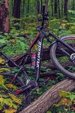 Bike, tree, forest