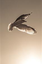 Bird, flight, wings, sky, sunshine