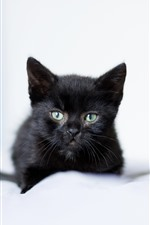 Preview iPhone wallpaper Black kitten, furry, hazy