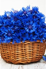 Blue flowers, cornflowers, basket