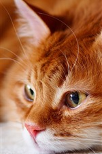Preview iPhone wallpaper Cat want to sleep, look, face, eyes