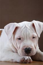 Filhote de cachorro bonito, descanso, vista frontal