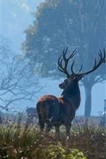 Deer, forest, fog