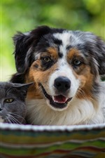 Preview iPhone wallpaper Dog and cat, hammock