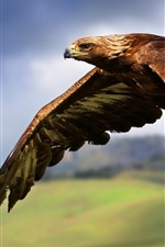 Preview iPhone wallpaper Eagle flight, wings, sky