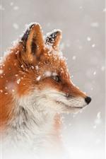 Raposa, olhar, cabeça, vista lateral, neve