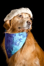 Preview iPhone wallpaper Funny dog, hat, glasses, scarf