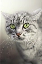 Preview iPhone wallpaper Gray cat, face, green eyes, hazy background