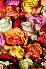 Many roses background, colorful flowers, petals