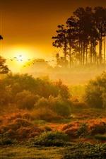 미리보기 iPhone 배경 화면 아침, 나무, 잔디, 안개, 새, 일출