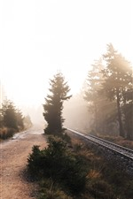 Morning, trees, railroad, sun rays, fog