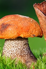Preview iPhone wallpaper Mushroom, dry leaf, green grass