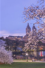 Preview iPhone wallpaper New York, park, sakura bloom, dusk, lake, spring