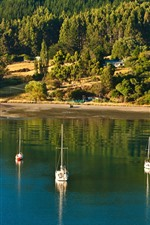 Preview iPhone wallpaper New Zealand, Picton, sea, trees, boats, sunshine