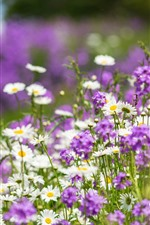Purple and white flowers, summer, hazy