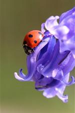 Purple flowers, ladybug