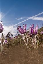 iPhone壁紙のプレビュー 眠っている草、紫色の花、太陽光線