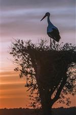 Preview iPhone wallpaper Stork, nest, bird, silhouette, sunset