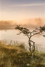 미리보기 iPhone 배경 화면 태양 광선, 나무, 잔디, 연못, 아침, 안개
