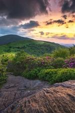 미리보기 iPhone 배경 화면 일몰, 산, 녹색, 꽃, 구름, 황혼