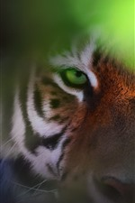 Preview iPhone wallpaper Tiger, face, look, eyes, hazy