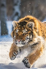 Preview iPhone wallpaper Tiger running in the snow, winter