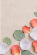 White and orange petals, green leaves