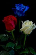 iPhone壁紙のプレビュー 白、赤、青、3色のバラ、黒の背景