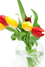 Yellow and red tulips, green leaves, vase, water droplets, white background