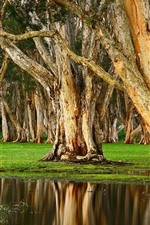 Preview iPhone wallpaper Australia, Randwick, Centennial Park, trees, puddle, water