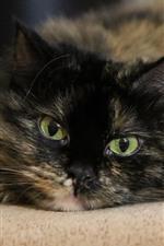 Gato preto, rosto, olhos verdes, olhar, nebuloso