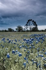 Blue flowers, grass, trees, thick clouds
