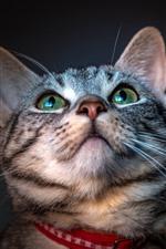 Cat look up, green eyes, cute pet