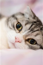 Preview iPhone wallpaper Cute cat look at you, bed, hazy