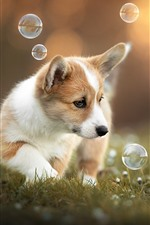Preview iPhone wallpaper Cute puppy play bubbles