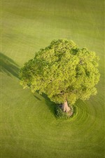 Preview iPhone wallpaper England, Yorkshire, meadow, tree, green, nature scenery
