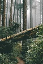 미리보기 iPhone 배경 화면 숲, 나무, 덤불, 안개