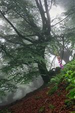 Floresta, árvores, flores cor de rosa, nevoeiro