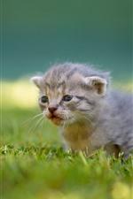 Preview iPhone wallpaper Furry kitten, grass, cute animal