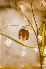 미리보기 iPhone 배경 화면 잔디, 꽃, 물, 태양 광선, 안개