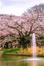 iPhone壁紙のプレビュー 日本、桜、花が咲く、公園、池
