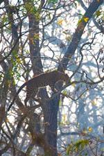 미리보기 iPhone 배경 화면 표범, 나무, 야생 동물에 올라