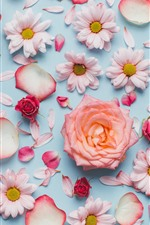 Rosas e camomila, pétalas