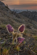 Preview iPhone wallpaper Sleep-grass, purple flowers, slope, mountains, sun rays, morning