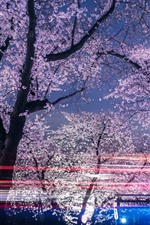 Preview iPhone wallpaper Spring, sakura blossoms, trees, night, light lines