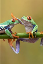 Three green frogs