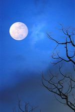 Tree, moon, blue sky, night